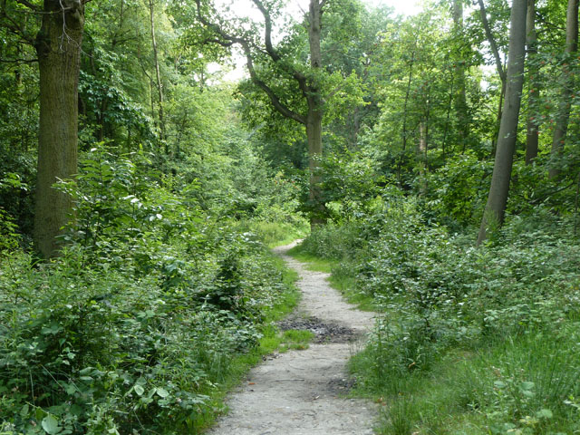 Path in Spring Park woodland