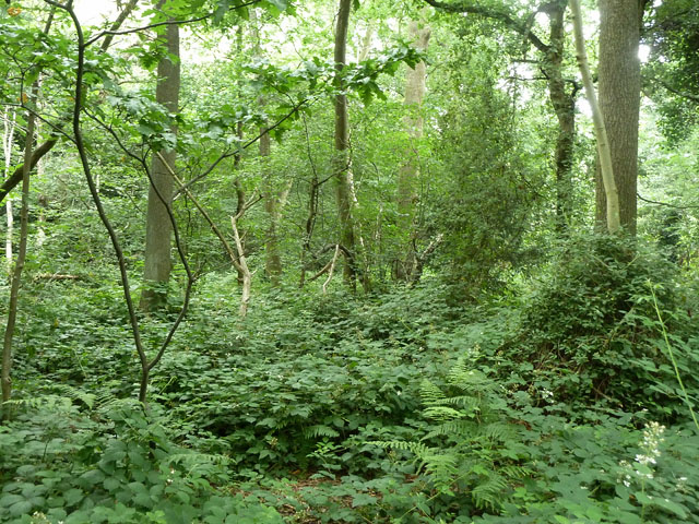 The northern finger of Threehalfpenny Wood