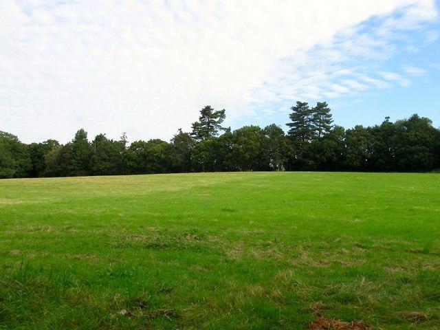 Maggotty Field/Middle Field