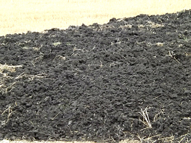 One of many manure heaps appearing in the area