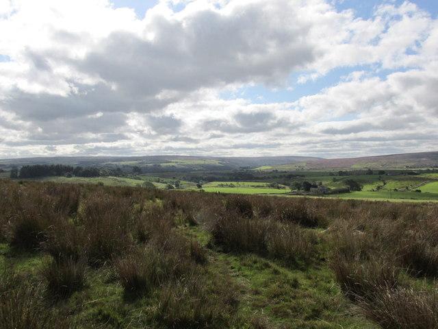 Rough pasture on Hartleyburn common.