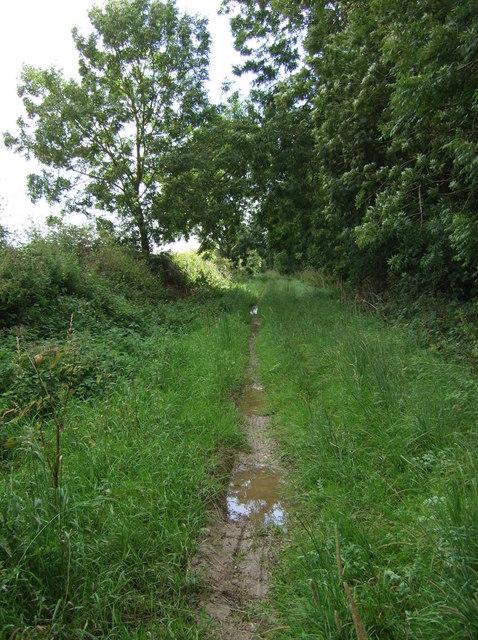 Muddy track beside Fox Covert Plantation