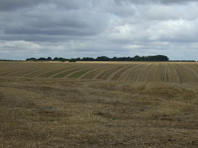 Stubble field towards High Caythorpe