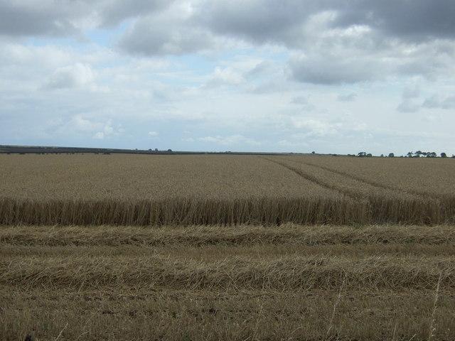 Harvesting in progress, Boynton Field