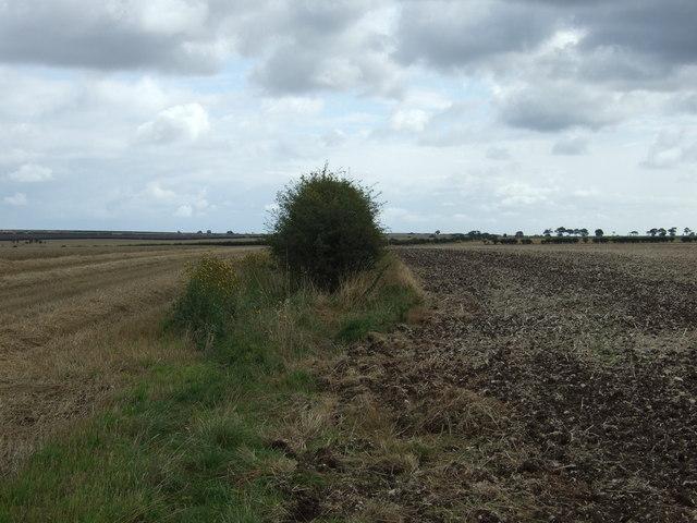 Hedgerow and fields, Boynton Field