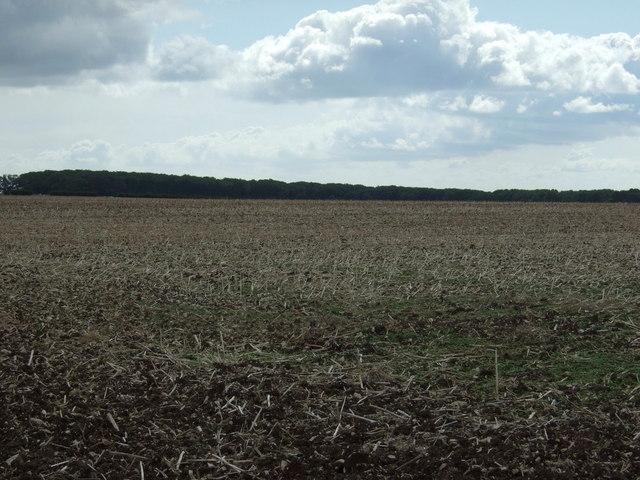Boynton Field