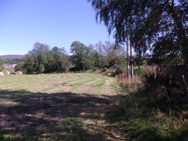Hedgerow by Baremuir