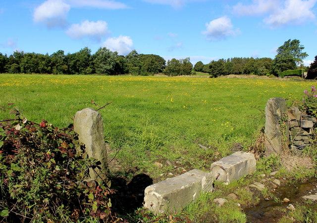 Meadow at Heaton Shay