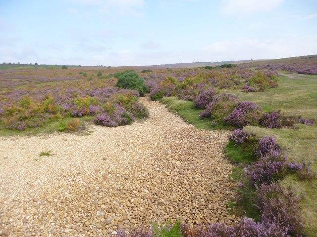Godshill, streambed