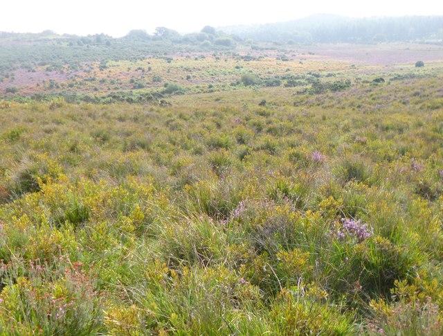Godshill, humid heathland