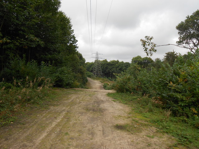 Track, Heath Wood, Penenden Heath