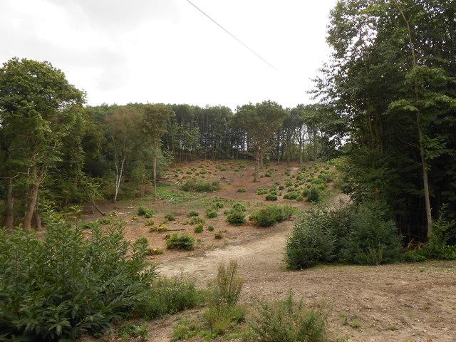 Recently Cleared Woodland, Heath Wood