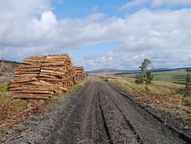 Timber Harvesting Operations, Riccarton Forest