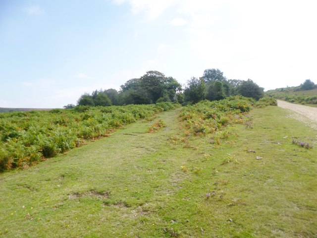 Cockley Bushes
