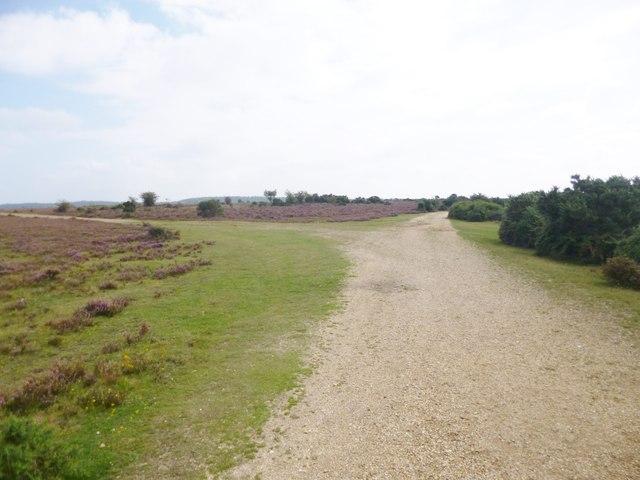 Little Cockley Plain, track junction