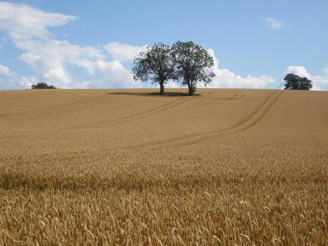 Arable field north of Longdyke