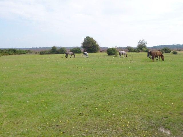 Leaden Hall, ponies