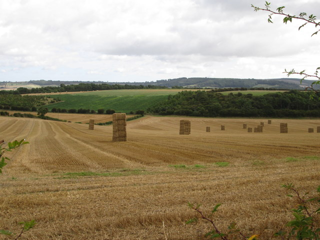 Harvest  in  bales  to  collect