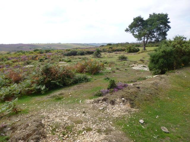 Deadman Hill, former gravel pits