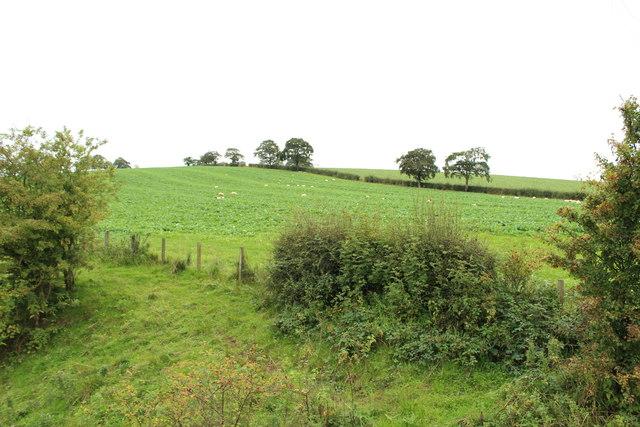 Farmland at Clews Mount
