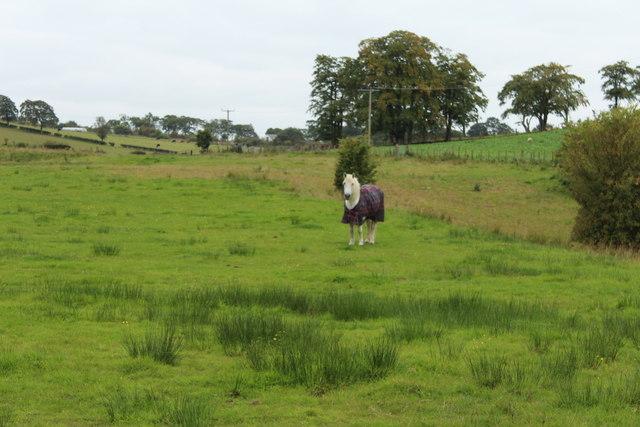 Horse at Brackenhill Farm