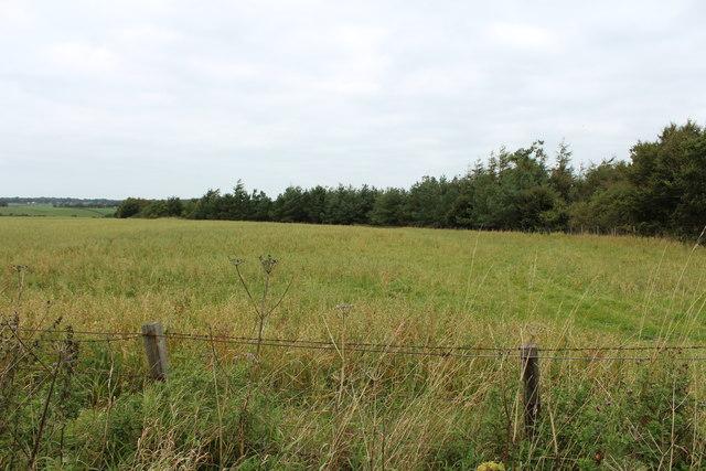 Farmland at Coachford Wood