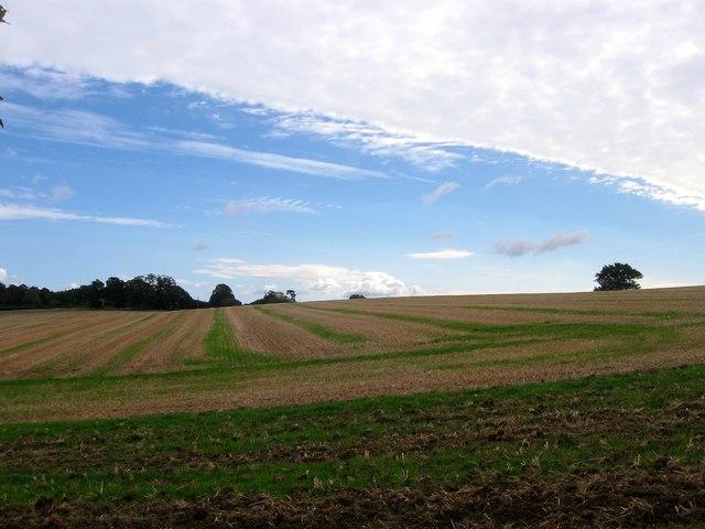 Coppice Field/Great Field