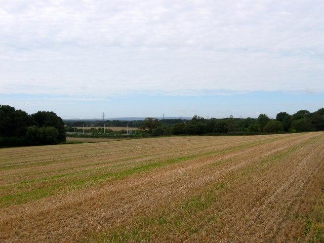 Great Wantleys Field/Wantley Field