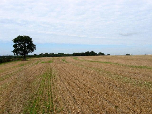 Furze Field/Hilly Field