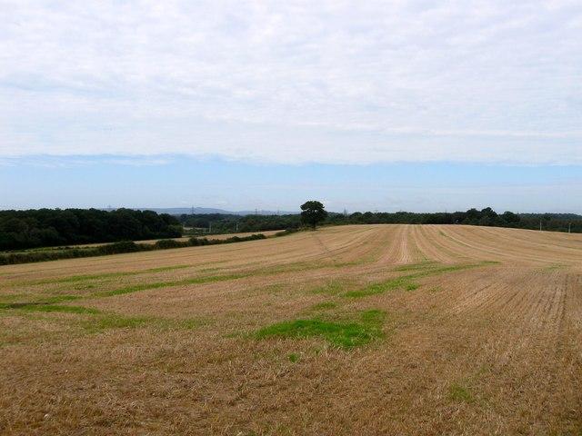 Roll Field/Hilly Field/Furze Field