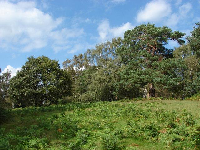 Open woodland, Chinthurst Hill