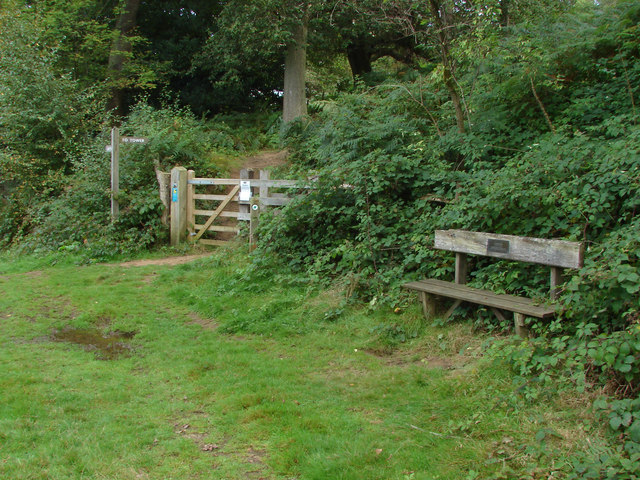 Gate and bench, Chinthurst Hill