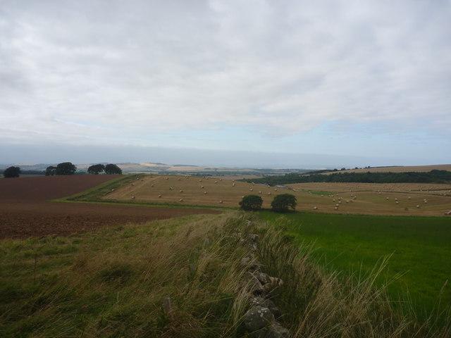 East Lothian Landscape : Field Boundary Near Chesters farm