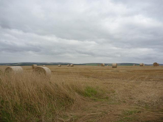 East Lothian Landscape : Field Scene On The Gifford Road