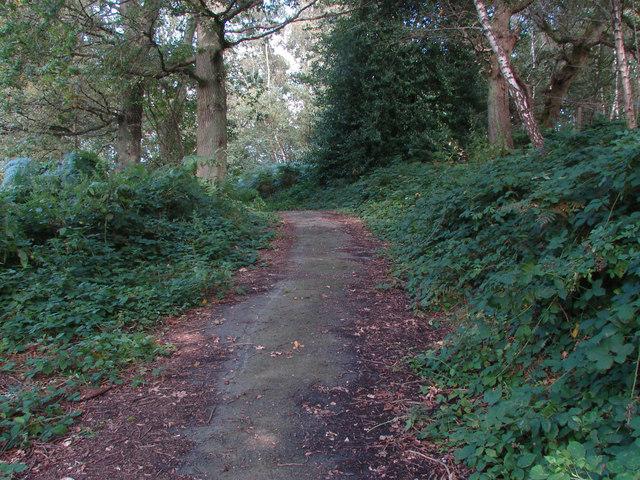 Path, Chinthurst Hill