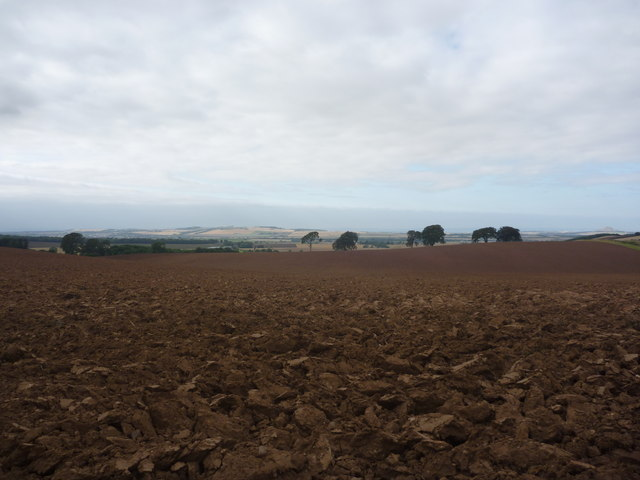 East Lothian Landscape : Heavy Horses