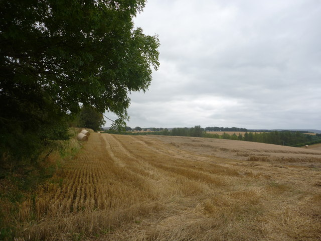 East Lothian Landscape : View Along Shelterbelt Field Boundary Near Bara