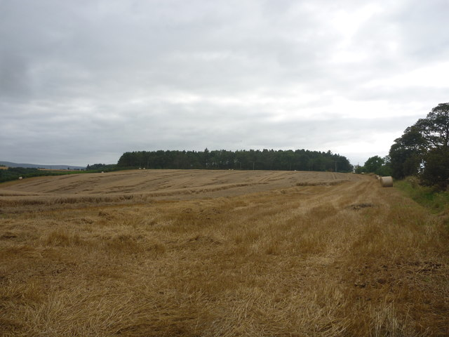 East Lothian Landscape : Field Beside The Gifford Road