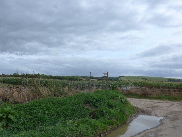 South Downs Way, Exton to Buriton (93)