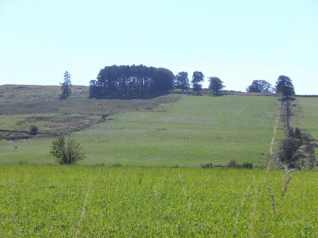 View to copse on Hill of Beltie