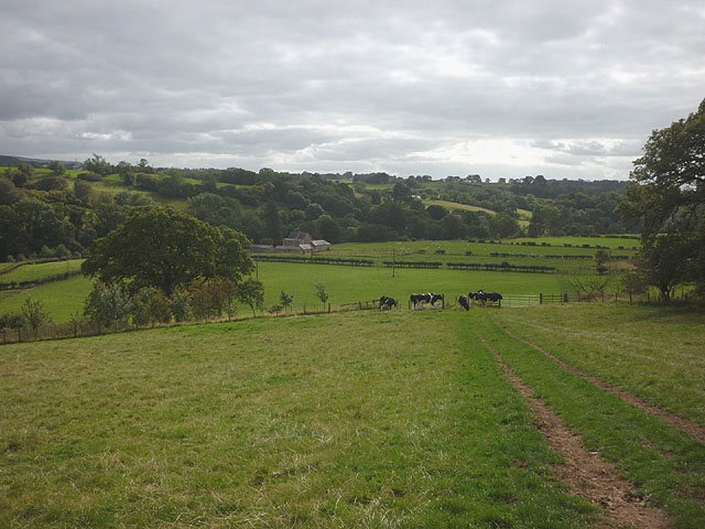Cattle pasture above the Irthing at Wallholme