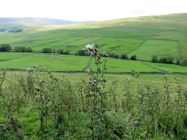 Pasture land near Halton Gill