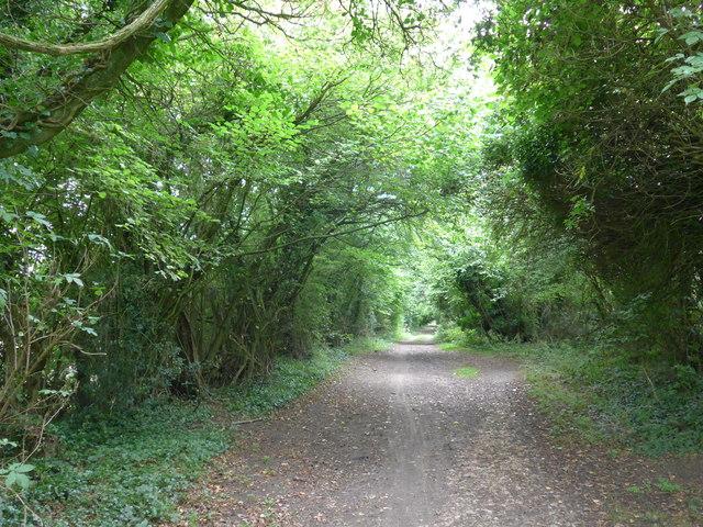 South Downs Way, Exton to Buriton (106)