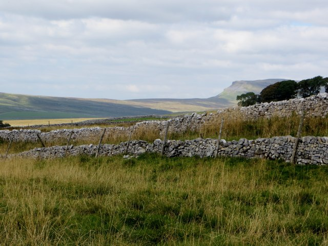 Rough pasture at Henside