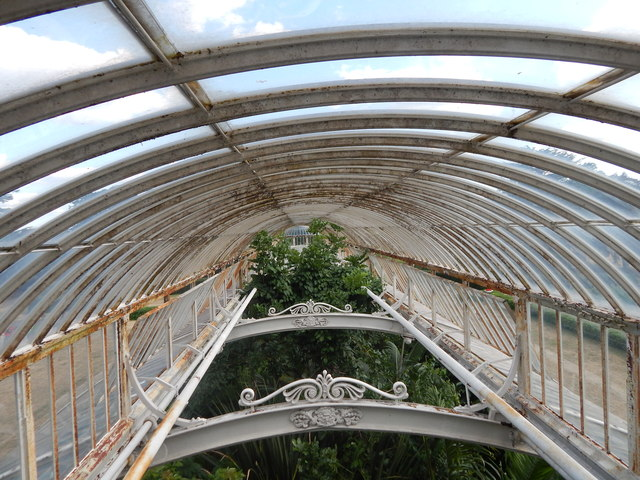 Arm in Palm House