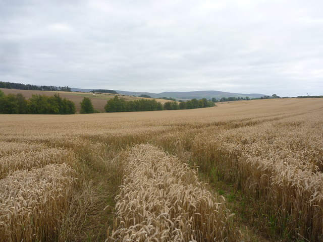 East Lothian Landscape : Out In The Field
