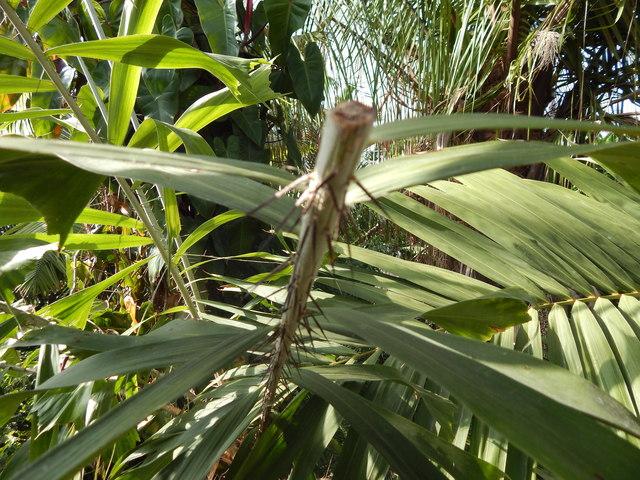 Spiny stem