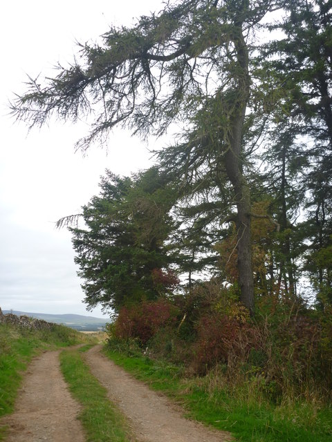 Rural East Lothian : Passing The Top Of The Shelter Belt