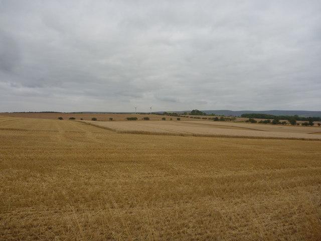 East Lothian Landscape : Harvest Time Near Winding Law