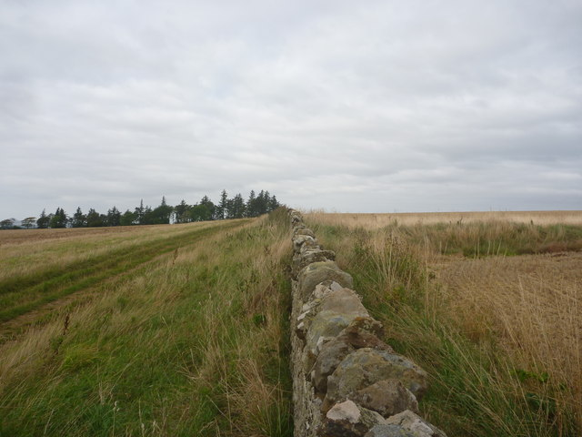 East Lothian Landscape : Field Boundary Near Winding Law